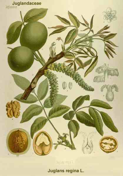Bloemen En Planten Encyclopedie.Digitale Fruit Abc Plantenencyclopedie Inheemse En Bijzondere